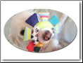 Custom Photo Oval Shaped Magnet