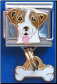 Jack Russell Dog with dangle bone